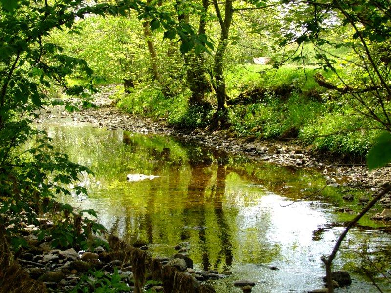 The  River  Eden  passing  through  woodland.