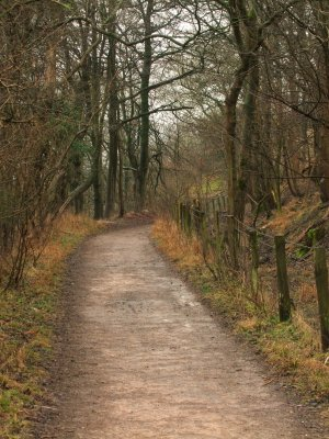 The  Roman  Road  passing  through  a  wood.