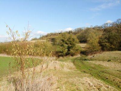 The  White  Horse  Trail  by  Bincknoll  Wood.