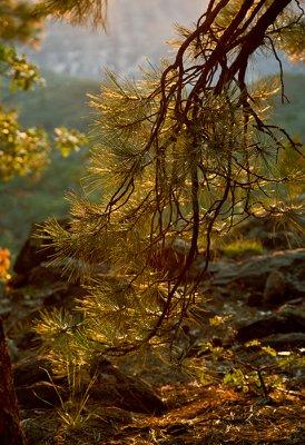 08-08 Golden Rays (Turkey Butte) 01.JPG