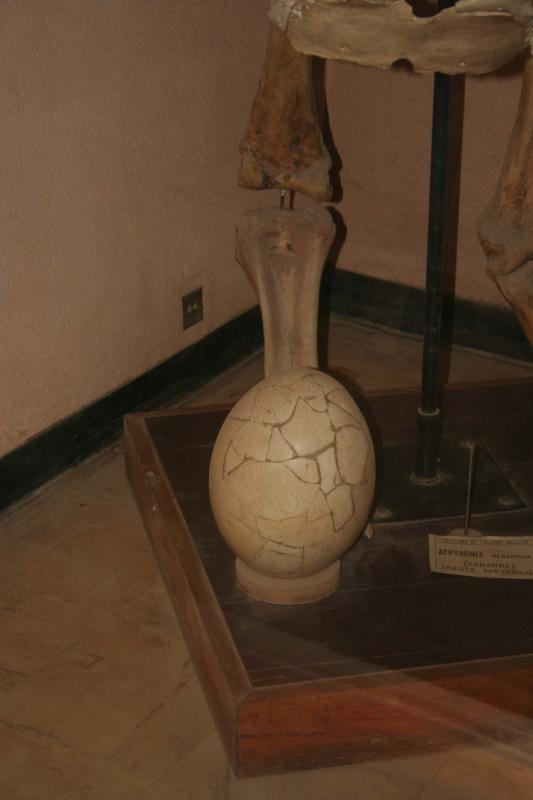 Aepyornis egg Museum de l Academie Malgache 1.I.2006.JPG
