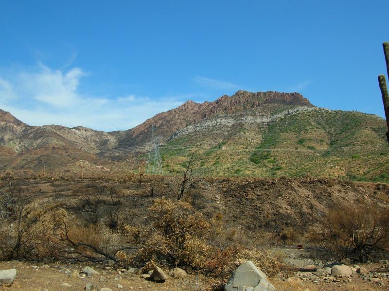 Desert land burned by the Peachville Fire
