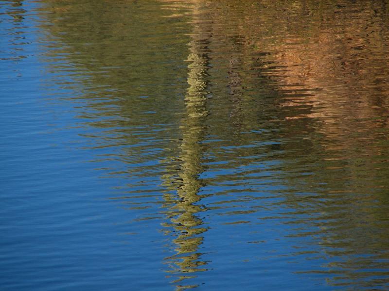Saguaro reflection