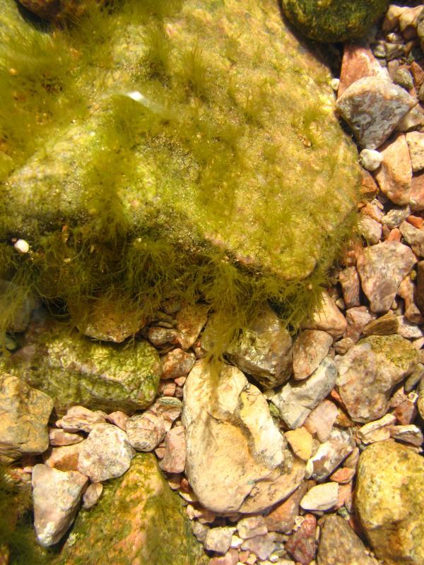 Underwater rock furry with algae