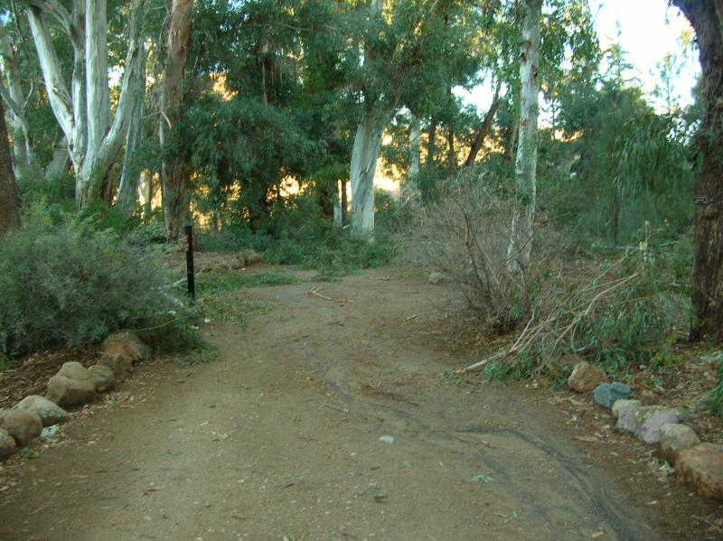 Main Trail Through the Eucalyptus Forest