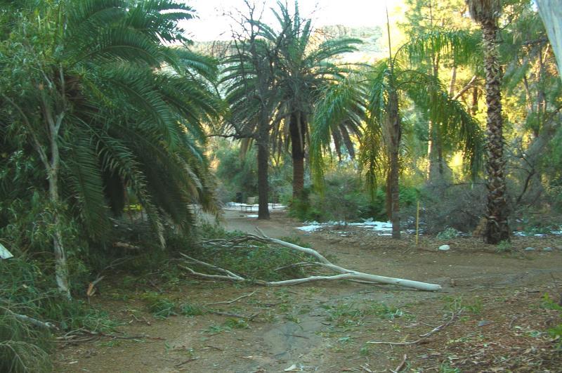 Fallen Eucalyptus Limb