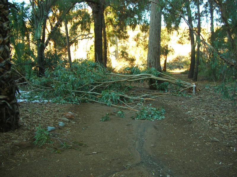 Pine Loop Trail