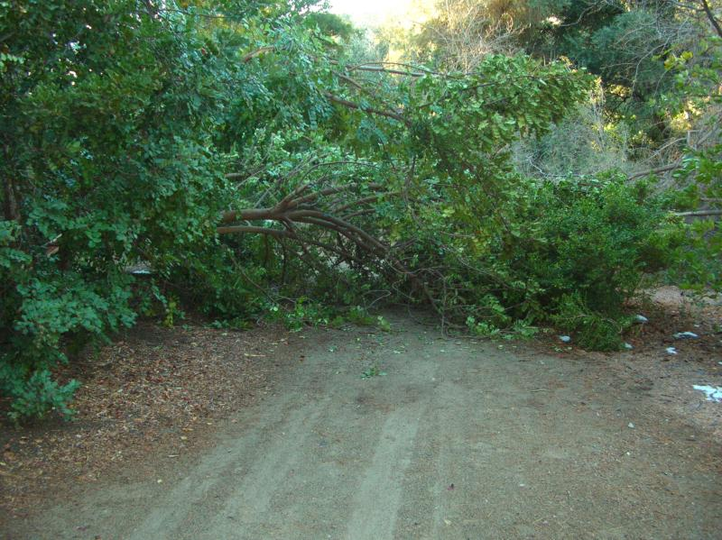 Broken Branches from the Carob Tree Blocking the Main Trail