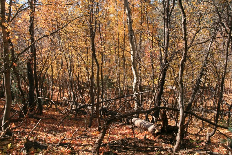 Along Dick Hart Ridge FR139