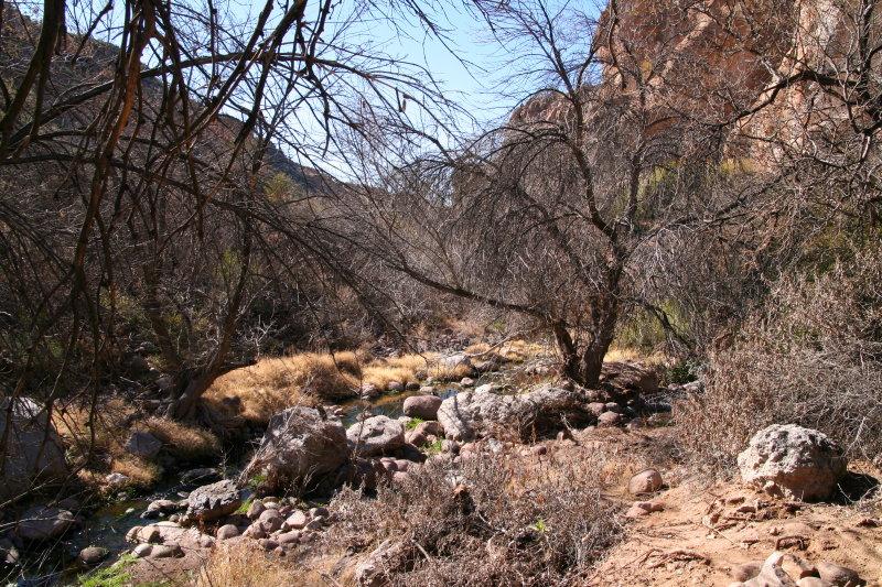 Leafless trees in Queen Creek