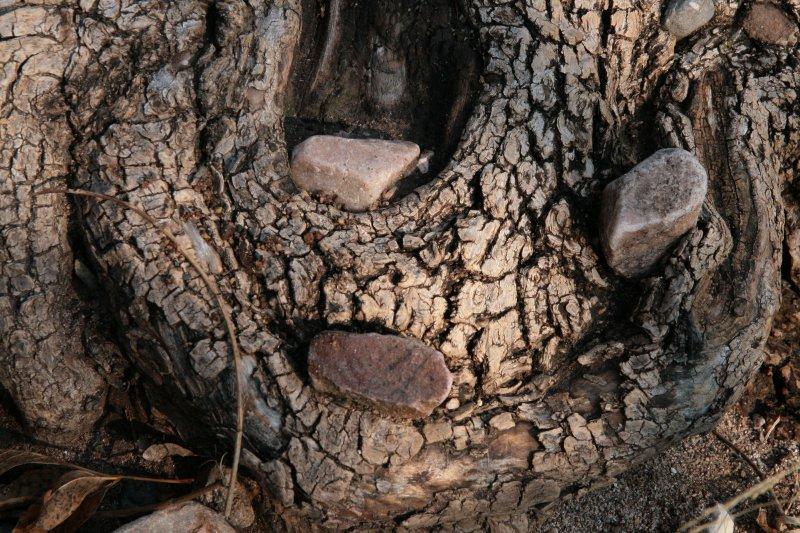 Three stones on a tree root