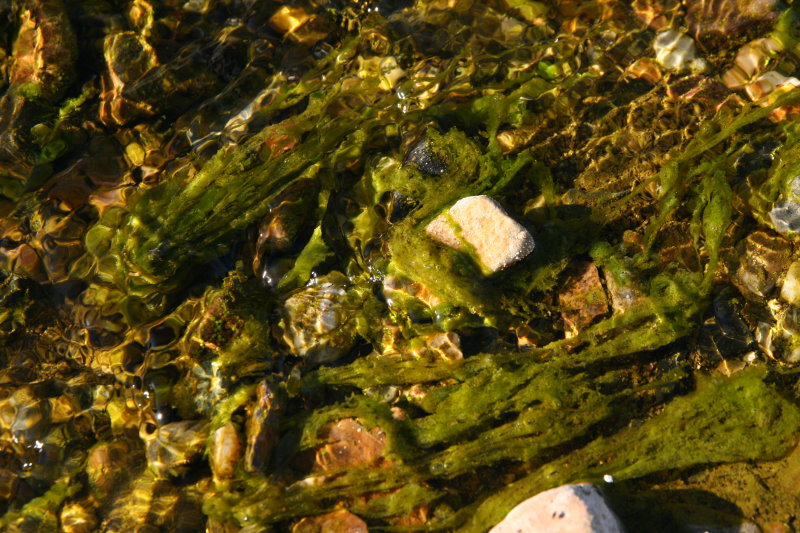 Algae in Silver King Creek