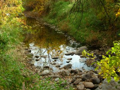 Fall color reflection in Queen Creek