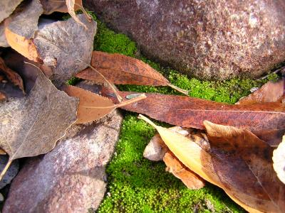 Leaves and moss in Queen Creek