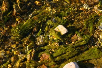 Algae in Silver King Creek