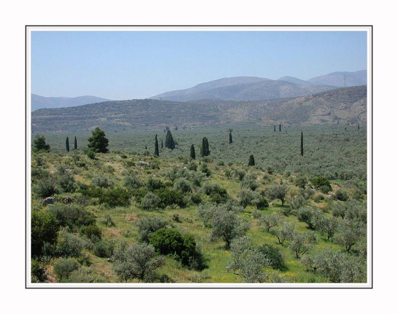 Landscape near Delphi