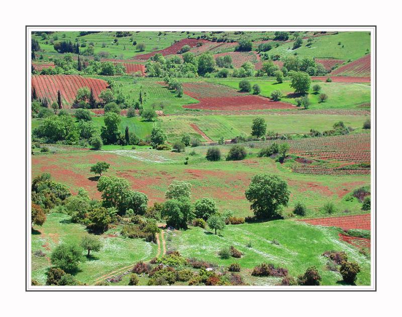Natural farm landscape