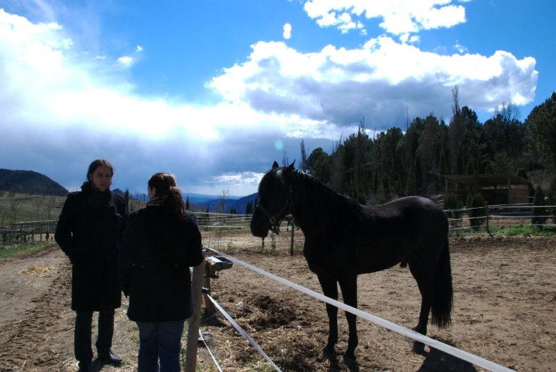 Bernat, Francine, Horse