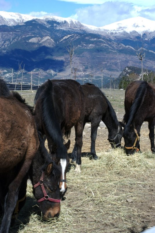 Horses on the Mountain