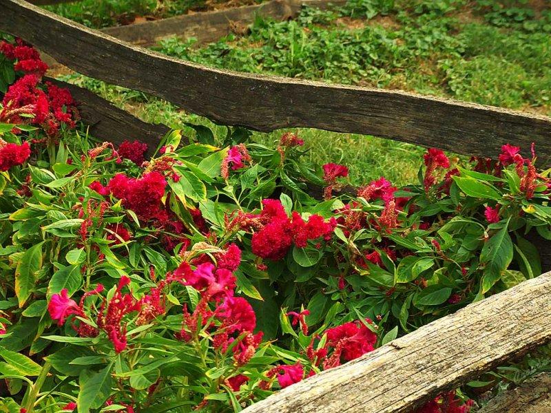 New Salem Flower Garden.jpg