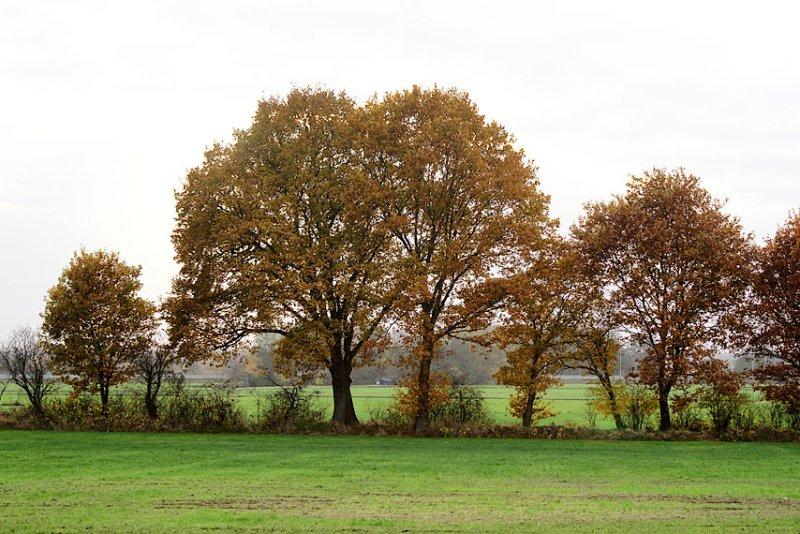 fields near Haren