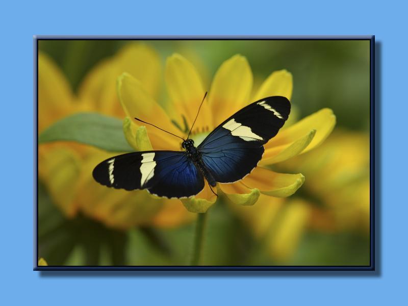 Butterfly_0100.jpg