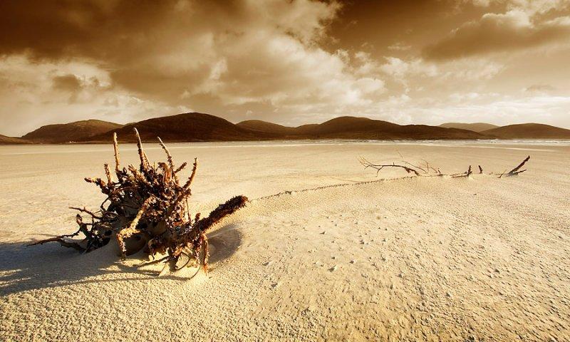 lowtide desert