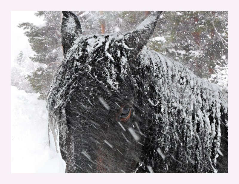Horse in the storm.