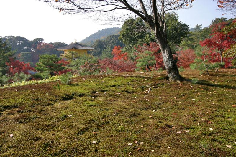Kyoto 4.jpg