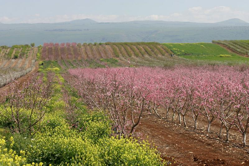 pearly spring in galilee 5.jpg