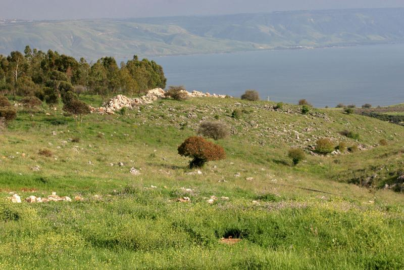 early spring in galilee.jpg