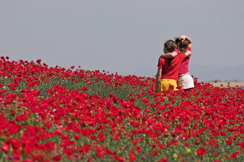 late_spring_in_israel__poppies 7.jpg