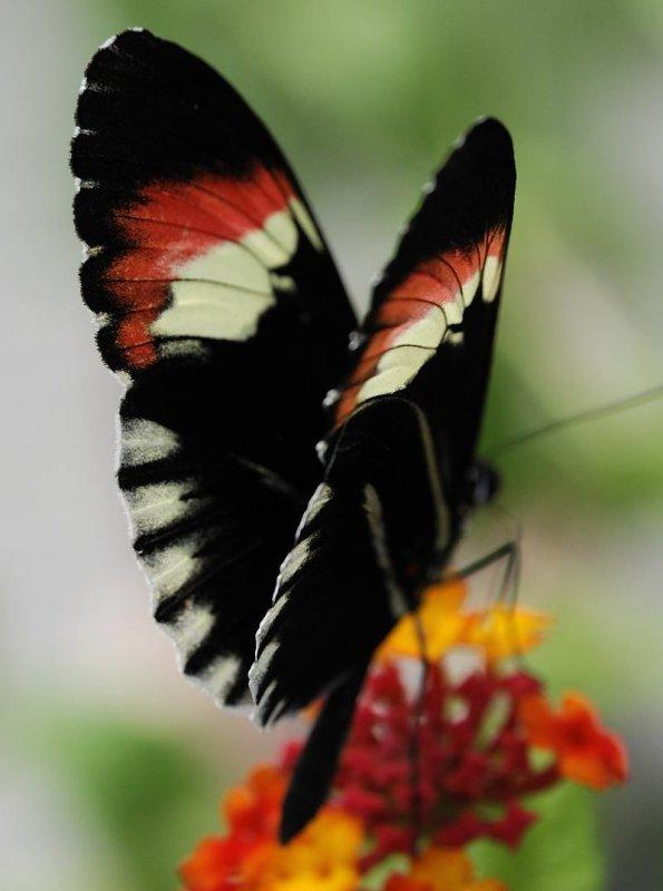 pbase Butterfly 4 _DSC0759.jpg