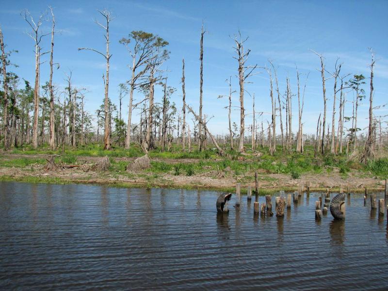 Death of a Cypress Swamp