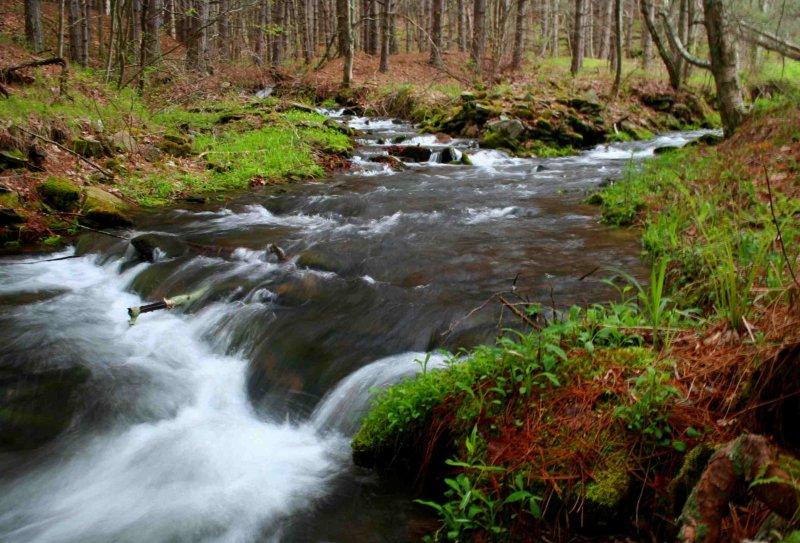 Merging Streams in Ellerber Creek Spring Run-Off tb0509jdr.jpg