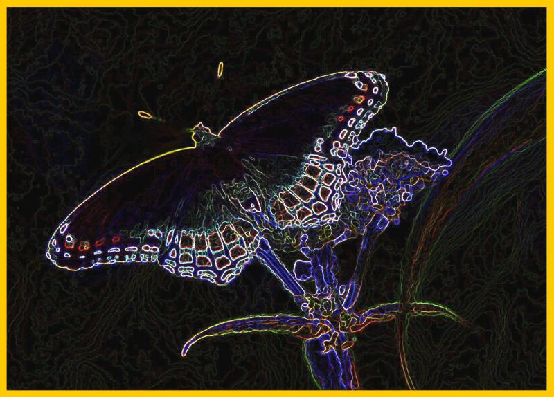 Red Spotted Purple Butterfly on Boneset Csk tb0905.jpg