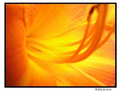 Flower On Fire