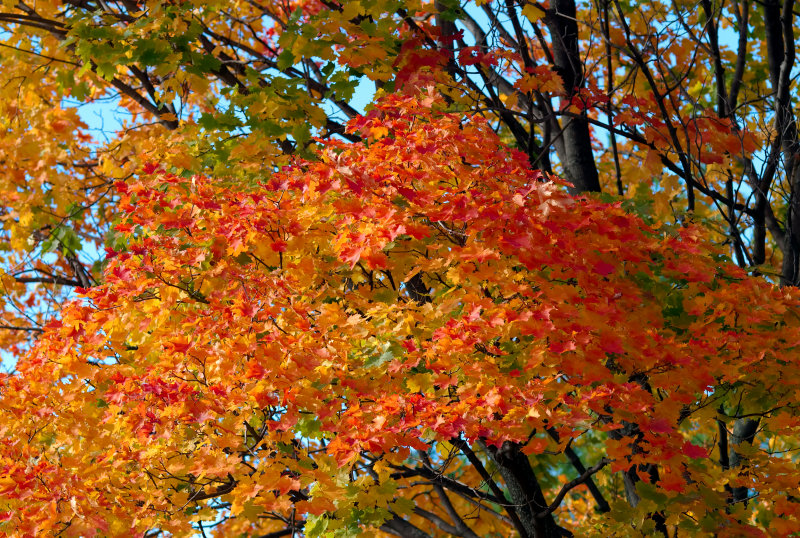 Fall  Ontario 2007