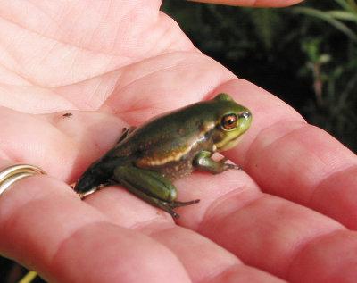 Yng Frog-15.jpg