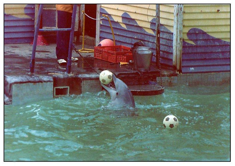 pDolphins.jpg