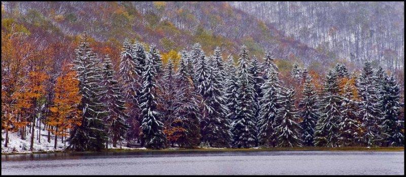 Spruce and Maple Lyman Lake