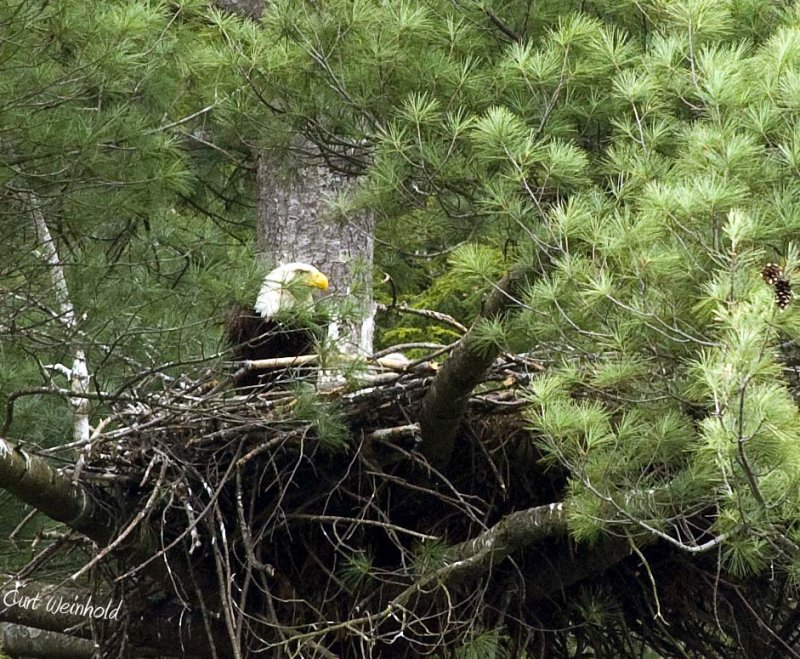 On the nest.