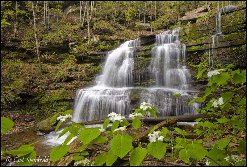 Four Mile falls & Hobblebush