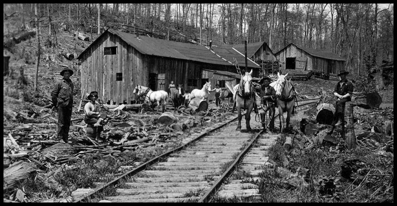 Lumbering Camp Clinton Co.