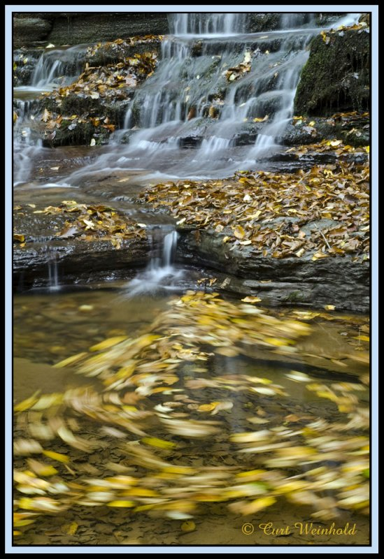 Leaves circling in whirlpool currents.