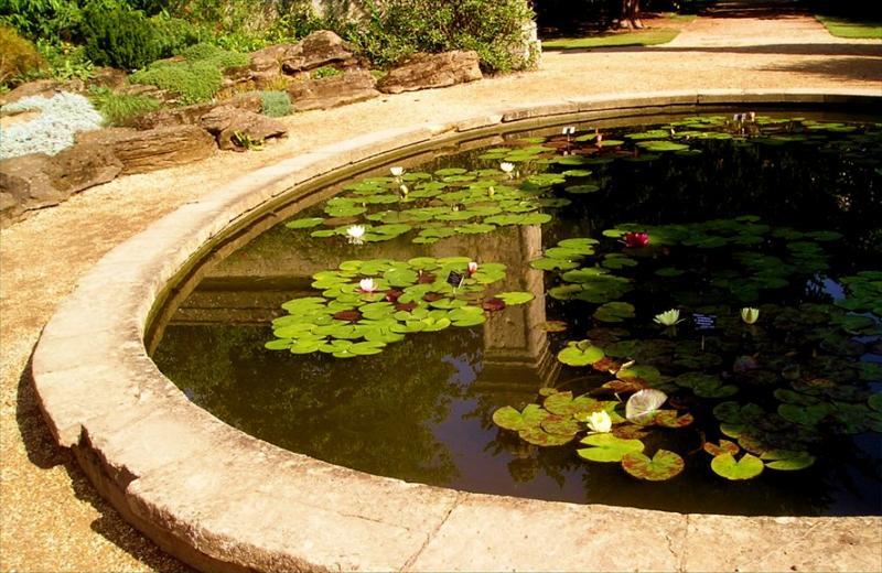 Pond at Oxford Botanic