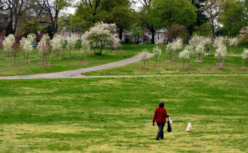 In a Spring wonderland