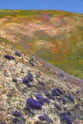 Monet Would Like Gorman ...