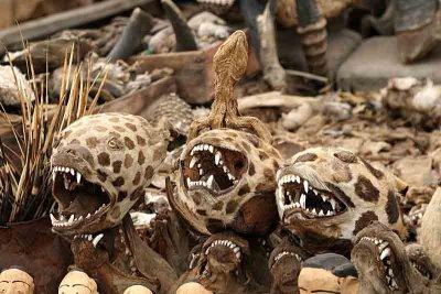 Hyanas in the voodoo fetish market in Lomé.