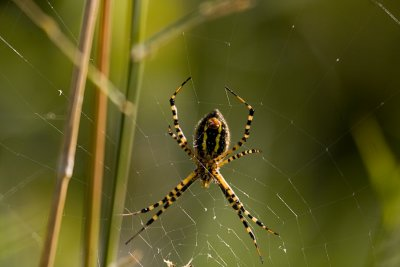 08-30-08 The spider 021.jpg